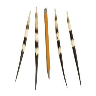 African Crested Porcupine Large Quill (each) (Natural Bone): Industrial & Scientific