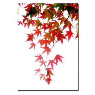 Trademark Art Japanese Maple Leaves Canvas Art