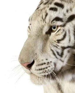 Animal Wall Decals White Tiger   18 inches x 15 inches   Peel and Stick Removable Graphic   Wall Decor Stickers