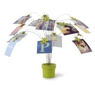 Umbra Petal Desktop Photo Holder, Avocado   Picture Frames