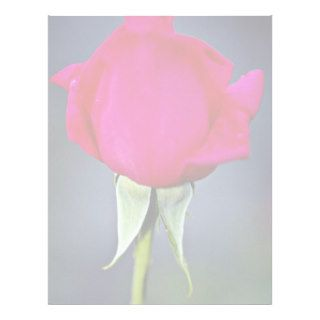 Hybrid Tea Rose 'Miss All American Beauty' Yellow Letterhead Design