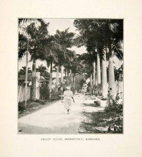 1907 Print Bridgetown Barbados Caribbean Street Palm Tree Tropics Cityscape Art   Original Halftone Print