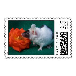 White and Black mouse Orange Tea Rose Postage Stamps