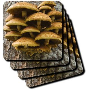 cst_93622_3 Danita Delimont   Fungi   Oregon. Honey mushroom fungi near Metolius River   US38 BJA0560   Jaynes Gallery   Coasters   set of 4 Ceramic Tile Coasters Kitchen & Dining