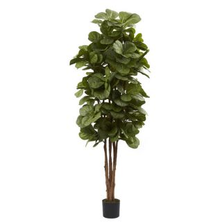 foot Fiddle Leaf Fig Tree   15673747   Shopping