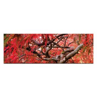 Japanese Maple by Andrew Brown Wrapped Photographic Print on Canvas by